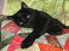 Mr Moda on his quilt.  Cats love quilts, too!