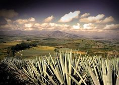 I'm looking forward to seeing how tequila is made in Tequila, Mexico.