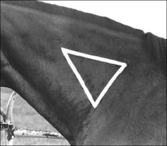 How to Give Your Horse an Intramuscular Injection. #horses #health #medication #horsecare http://www.extension.org/pages/29835/how-to-give-your-horse-an-intramuscular-injection#.UgF3u23JKN8