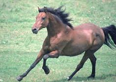 images of glloping horses - Yahoo Image Search Results