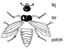 Illusztráció fej, tor, potroh felirattal Interactive Notebooks, Biology, Insects, Homeschool, Science, Teaching, Education, Bees, World Discovery
