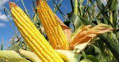 Warga Afrika Terkesan dengan Pertanian Indonesia
