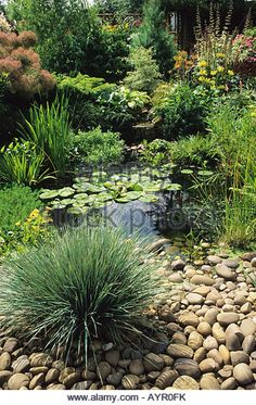 pebble edged pond - Google Search