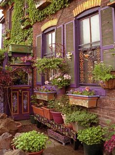 Window boxes- Obviously, Seth and I need to move to a small English village or a beautiful mansion in the country.  I'm reaching too high!