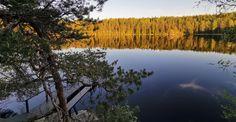 Lake and kuntta – Villa Glass House Pine Trees Forest, Small Lake, True Nature, Glass House, Evergreen, Finland, Fields, Villa, Landscape