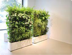 Her 2 mobile plantevægge, let at rulle rundt på kontorer. Planter, rumdeler og støvsuger i eet.