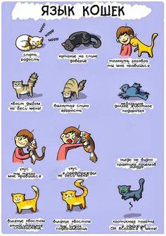 """Инфографика """"Язык кошек""""."""