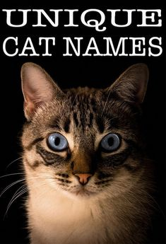 Unique Cat Names - Over 140 Unusual Names For Your New Cat Kittens kitten names Kitten Names Boy, Kitten Names Unique, Girl Pet Names, Funny Cat Names, Cute Cat Names, Unusual Names, Unique Cats, Funny Cats, Animal Names Unique
