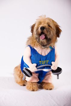 weightlifter dog costume - Google Search