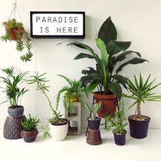Indoor Plants For Stress Relief Skinny Laminx Paradise Is Here