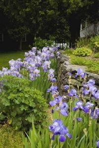When to plant flowers in Ohio
