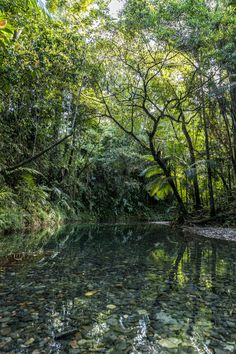 Billabong in the Daintree Rainforest Billabong, Rainforest Project, Nature Photography, Travel Photography, Daintree Rainforest, Brisbane, Paludarium, Tropical Forest, Paradise Island