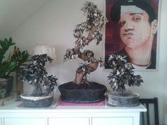 Echtholzbonsai-Leiche und seine zwei kleinen Brüder. Planter Pots, Timber Wood, Photo Illustration, Plant Pots