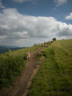 The Appalachian Trail... Life is full of ups and downs! Hike On!