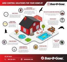 Check out our latest infographic on all the different residential bird control products Bird B Gone can provide! Bird Netting, Pvc Material, Roof Deck, Starling, Small Birds, Bird Species, How To Get Rid, Infographics