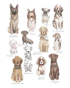 Dog Collage Print is on original made in Austin. of every purchase is donated to a charity partner when purchased through Roots and Revival. Cute Animal Drawings, Art Drawings, Watercolor Animals, Watercolor Art, Dog Illustration, Dog Paintings, Watercolor Portraits, Dog Portraits, Dog Art