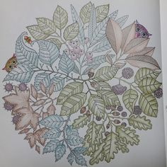 Youngok's Happy Arts: Coloring Book : Secret Garden #6 - Two Owls and One Bee  #coloringbookforadults #coloringbook #colortheory #secretgarden #johannabasford #secretforest #secretforestocean #비밀의정원 #컬러링북