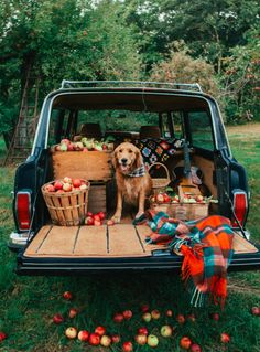 Astonishing Everything You Ever Wanted to Know about Golden Retrievers Ideas. Glorious Everything You Ever Wanted to Know about Golden Retrievers Ideas. Cute Puppies, Cute Dogs, Dogs And Puppies, Doggies, Animals And Pets, Baby Animals, Cute Animals, Patrick Jean, James Patrick