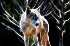 Glowing Wolf by Shane Bechler - Glowing Wolf Photograph - Glowing ...