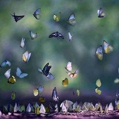 RAZÃO DE VIVER....Quando o paraíso desce...A terra agradece...~Sol Holme~