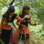 Plum Garden, Moc Chau