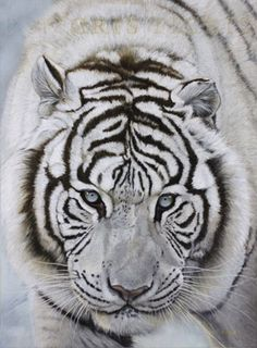 Danielle Beck - Tiger - Oil 54X73