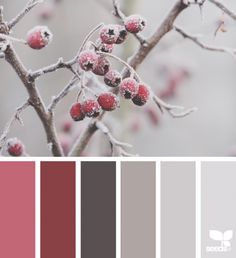 This pretty palette by proves it certainly is possible to find some warmth during the cold winter months! For colors that last no matter the season try Luxurious Red SW Urbane Bronze SW 7048 and Unique Gray SW Design Seeds, Pantone, Color Palette Challenge, Colour Pallette, Color Combinations, Color Balance, Winter Colors, Winter Color Palettes, Color Swatches