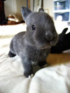 Bunnies are SO cute
