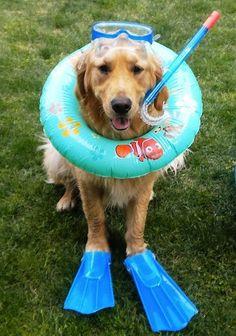 Pups like pool parties too!