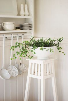 I need to re-paint all my plant stands cottage white, then distress them some.