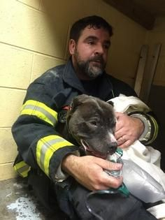 Paxton Fire Capt. Tom Savage comforts Stella, a dog rescued from a fire Sunday night at Sweetpea Friends of Rutland Animals Shelter at 1090 Pleasant St., Paxton, near the Rutland line. T&G Staff/Kim Ring