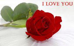 Картинки по запросу Beautiful roses in the dew. Pictures