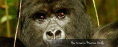 Gorilla Trekking 101 - your trek begins here