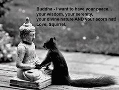 squirrel buddhist personals If you are preparing for the life in the uk test as part of your ilr or citizenship application the life in the uk test: free edition  squirrel publishing is.
