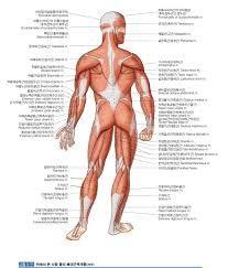 80 besten ~Human Anatomy Bilder auf Pinterest   Lernen, Mein körper ...