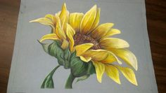 My colored pencil Sunflower