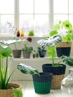 IKEA Nipprig range - woven baskets for indoor plants