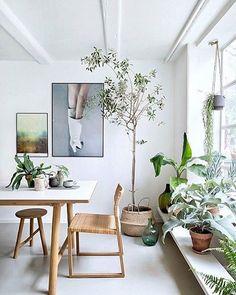 462 best plant life images green plants planting flowers indoor rh pinterest com