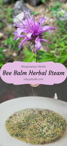 Bee Balm