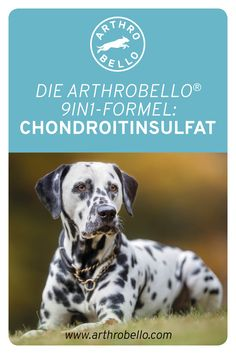 Durch den Wirkstoff Chondroitinsulfat werden die Knorpel Ihres Hundes vor dem Austrocknen geschützt und unbeschwertes Bewegen wird dadurch gefördert. Dogs, Animals, Pet Dogs, Animales, Animaux, Doggies, Animal, Animais