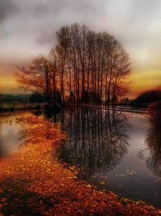 Golden Path Photograph  - Golden Path Fine Art Print