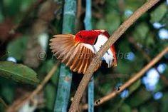 Výsledek obrázku pro paradise birds foto