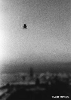 Daido Moriyama- fly on the wall