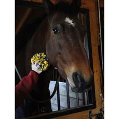 Fluff Monkey - Great for polishing your boots, giving your horse a massage near the sensitive face areas, oiling your tack, decorating your tack room, or wearing in your hair at the show.