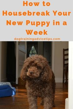 How to Housebreak Your New Puppy in a Week   Dog Training Tips   Dog Obedience Training   Housebreaking your dog   http://www.dogtrainingadvicetips.com/housebreak-new-puppy-week