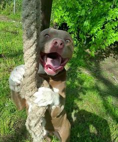 ☆♡ Follow us @OneFleur for more daily inspo ☆♡ Use 'Pinterest10' for 10% off your order #pitbull