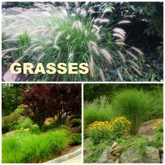Grasses and fall - a winning combination. See my very favorite grasses! http://www.landscape-design-advice.com/ornamental-grass.html