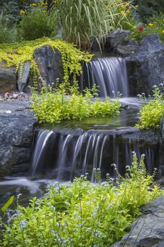 Water Feature…