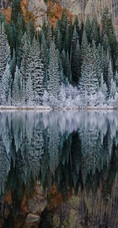 Bear Lake in Rocky Mountain National Park, Colorado • photo: Robin Wilson on Flickr....one of my favorite easy hikes