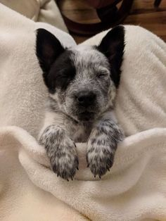 Things that make you go AWW! Like puppies, bunnies, babies, and so on. Cute Dogs And Puppies, Baby Dogs, I Love Dogs, Cute Baby Animals, Animals And Pets, Funny Animals, Beautiful Dogs, Animals Beautiful, Austrailian Cattle Dog